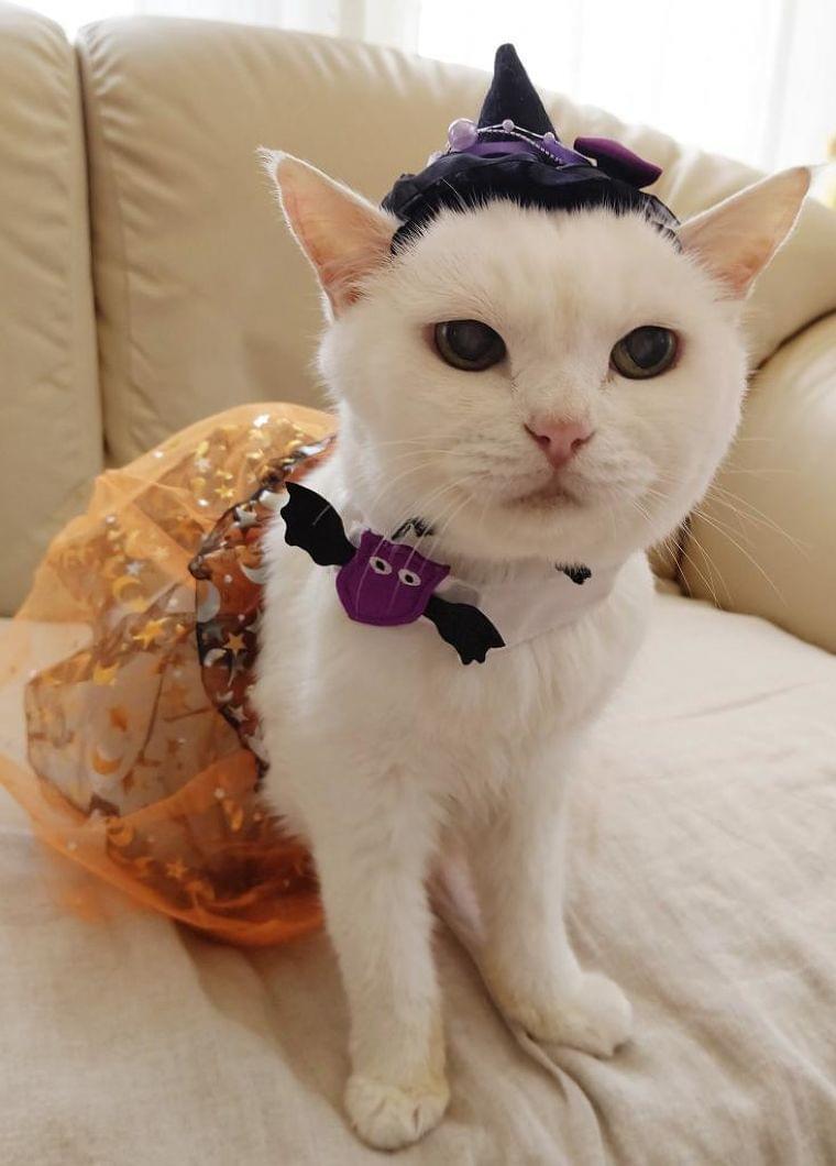 猫も血糖値にご用心! ペット栄養管理士が教える「食事の注意点」 (1/2) 〈週刊朝日〉|AERA dot. (アエラドット)