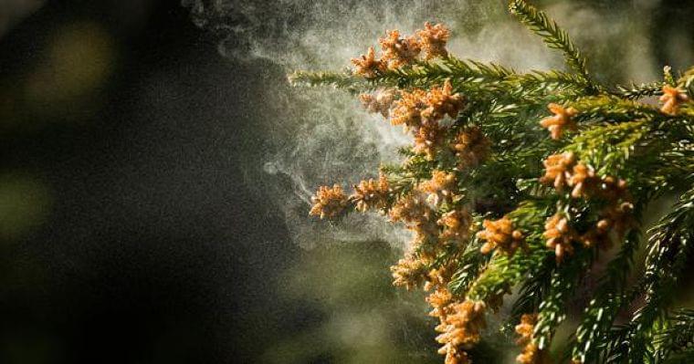 クックパッドニュース:食事で花粉症対策! ヨーグルト以外の注目食品とは!?[体の内側からキレイを目指す!美腸ライフVol.3] - 毎日新聞