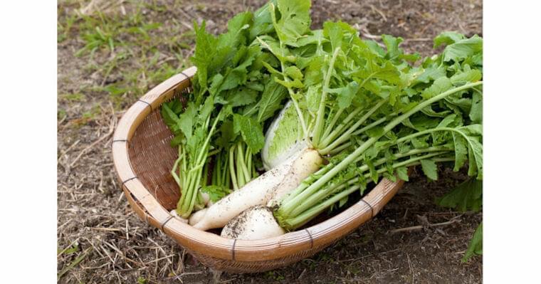 2月に旬を迎える食材とは? 野菜と魚介の保存方法やレシピを紹介 | マイナビニュース