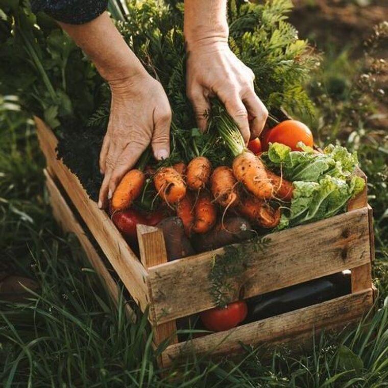 今、世界の土壌が危機!野菜から80%近くの「ミネラル」が減少(ウィメンズヘルス) - Yahoo!ニュース