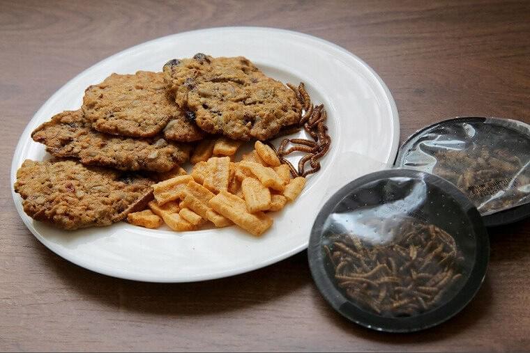 幼虫、食品として法制化へ ハンバーガー、ビスケットに EU(時事通信) - Yahoo!ニュース