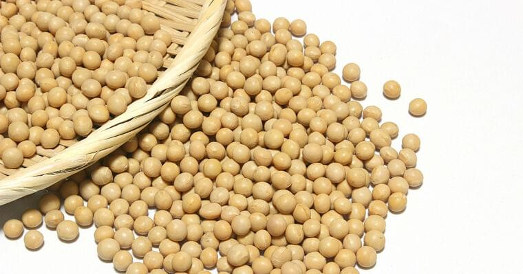 愛媛大、妊娠中の大豆摂取が子どもの多動問題に予防的であることを確認 | TECH+