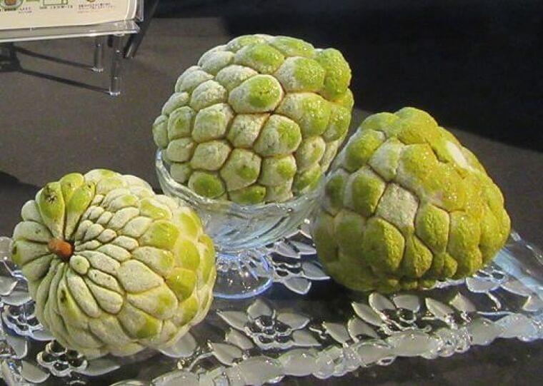 台湾政府、冷凍フルーツ「釈迦頭(しゃかとう)」日本への輸出拡大目指す 食品産業新聞社ニュースWEB