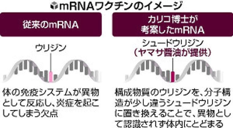 コロナワクチンにヤマサ醤油の技…うまみ成分の研究、mRNAの原料供給に進化 | ヨミドクター(読売新聞)