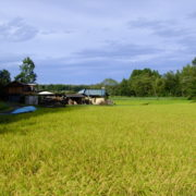遺品整理をする鳩山町の風景