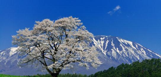 エンディングセンター桜葬