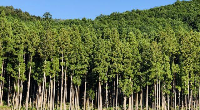 杉の伐採費用