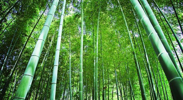 竹の伐採費用