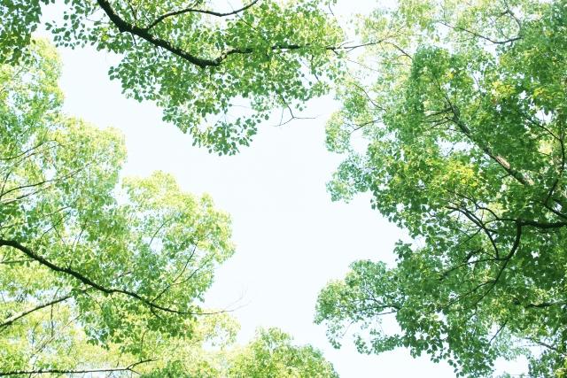 木の伐採費用
