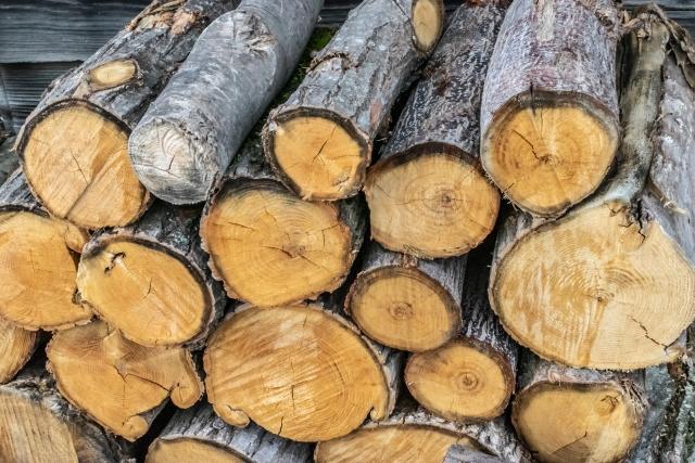 木の伐採費用が安い業者