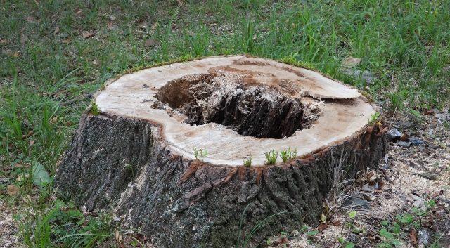 庭木の抜根費用