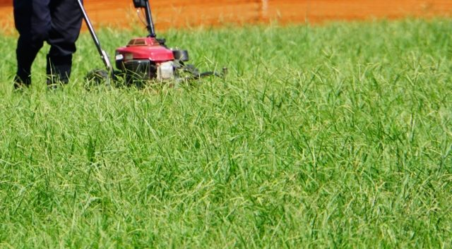 芝生の除草を行う