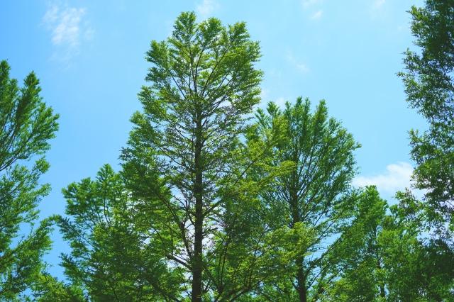 特殊伐採の費用相場を計算する