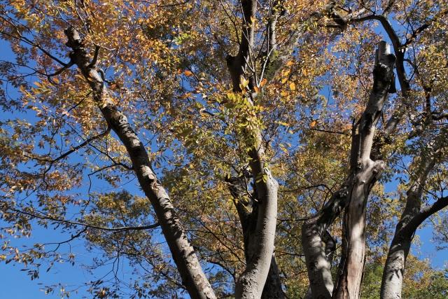 高木の剪定の費用相場