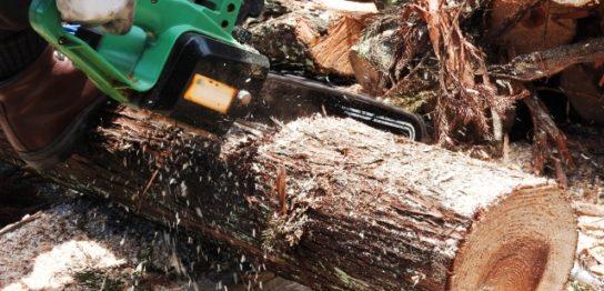 樹木の伐採費用