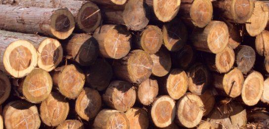 伐採の費用ってどれくらい?