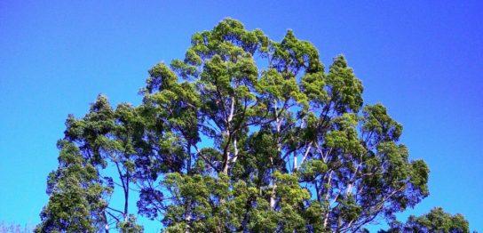 大木が生えているイメージ画像