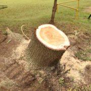 庭木の抜根が必要な木