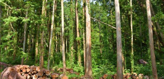雑木林を伐採する費用はどれくらい?
