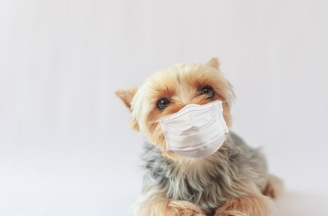 コロナに感染したペットの写真