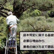 庭木剪定している業者の写真