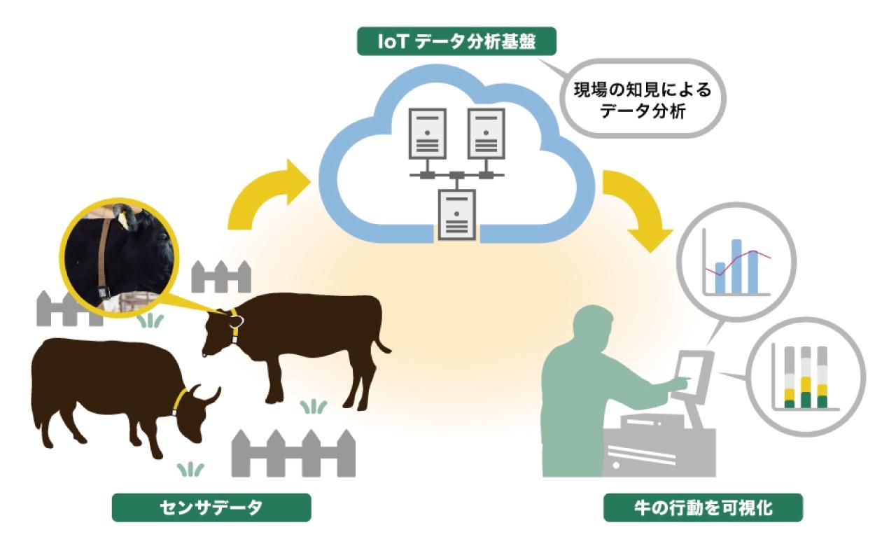 ダイエーグループの鹿児島サンライズファームが各社と連携、牛の行動分析モニタリングを本格導入