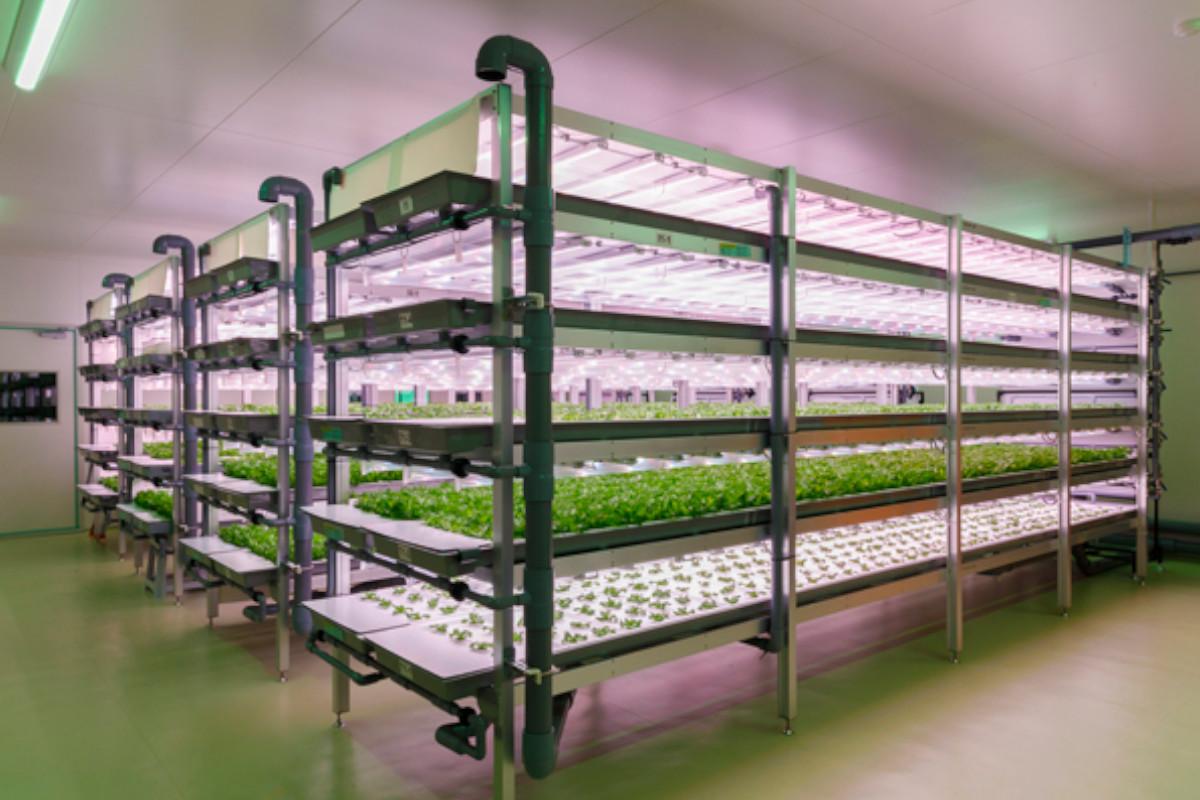 大和ハウス工業×三協立山|植物工場システム「agri-cube ID」を共同開発