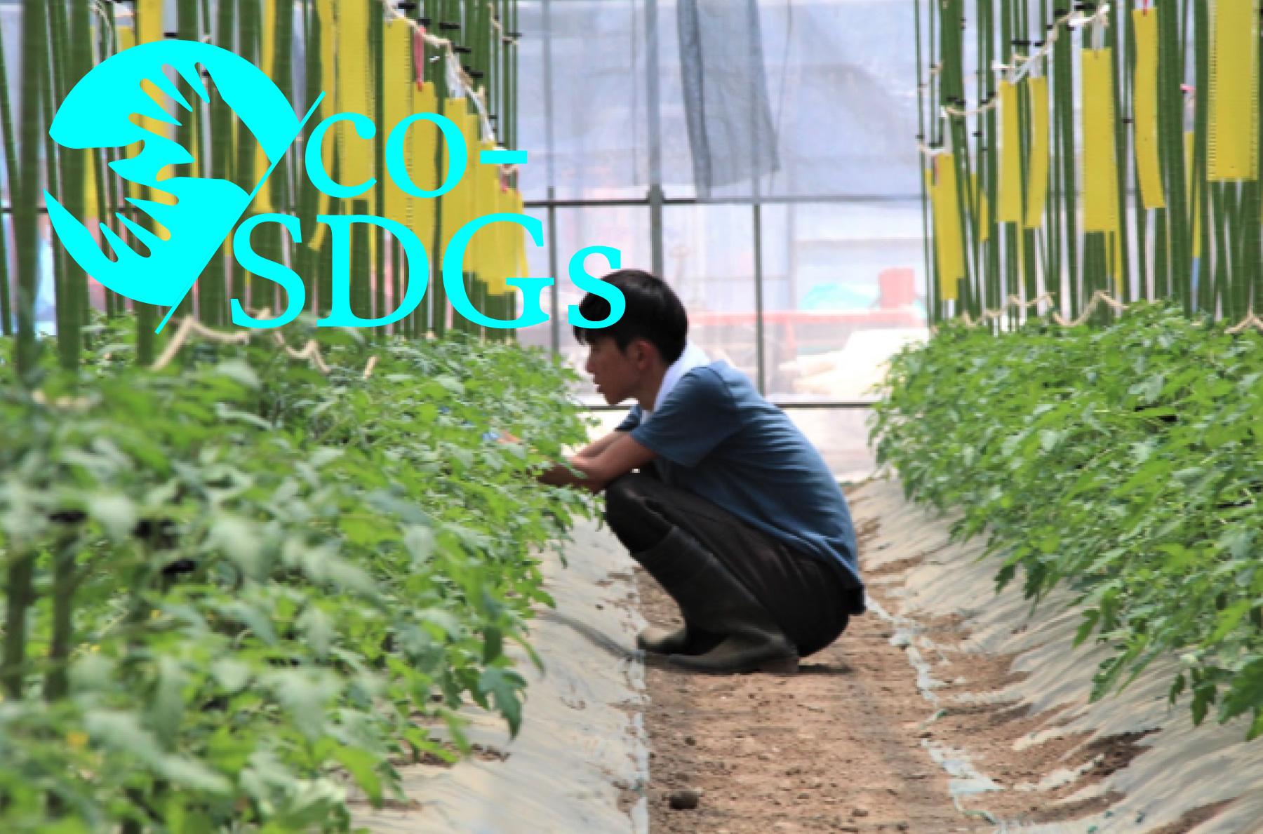 復興と障害者雇用を両立するため、KDDIエボルバが東松島市で実現した共創