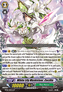 White Lily Musketeer, Cecilia
