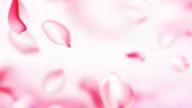 S&Mの女性マンション紹介☆ S&M極嬢 津・松阪店の求人ブログ