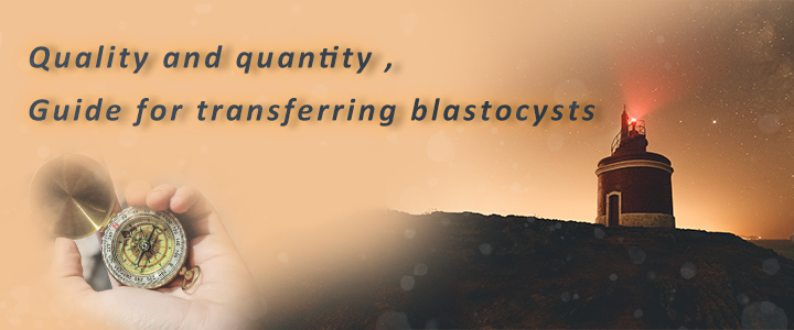Quality and quantity , Guide for transferring blastocysts