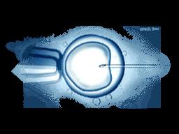 如何從「周丹薇事件」看排卵藥物的安全性?