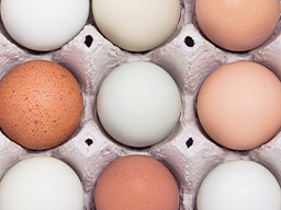 試管、凍卵前的養卵策略
