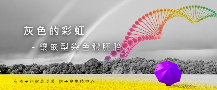 灰色的彩虹-鑲嵌型染色體胚胎