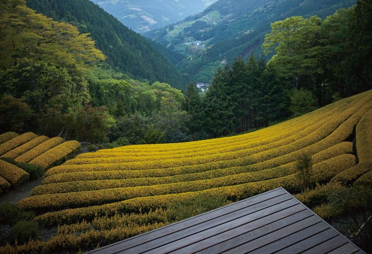 黄金の茶の間、黄金みどり茶園、静岡市葵区