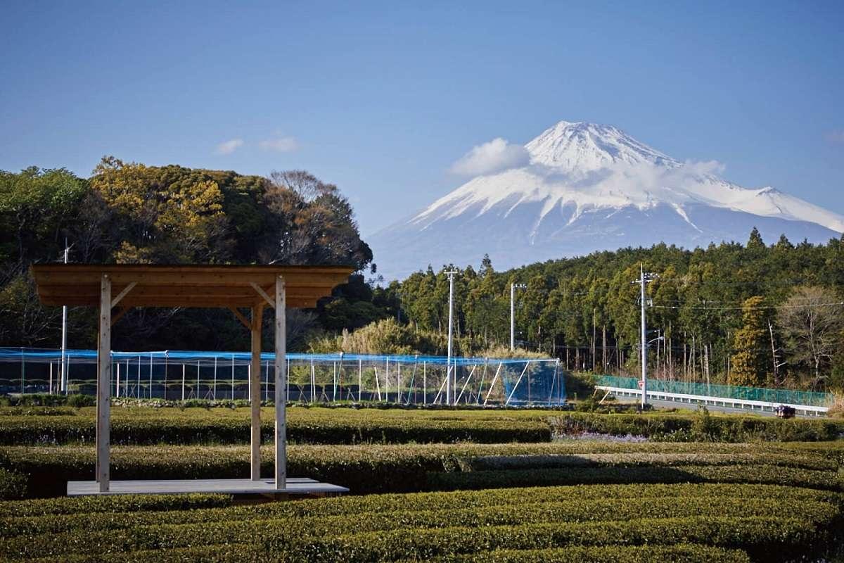 富士の茶の間、富士山まる茂茶園、富士市