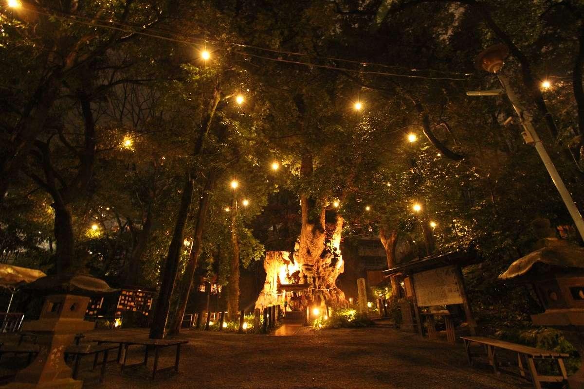 熱海、来宮神社、大楠、ライトアップ