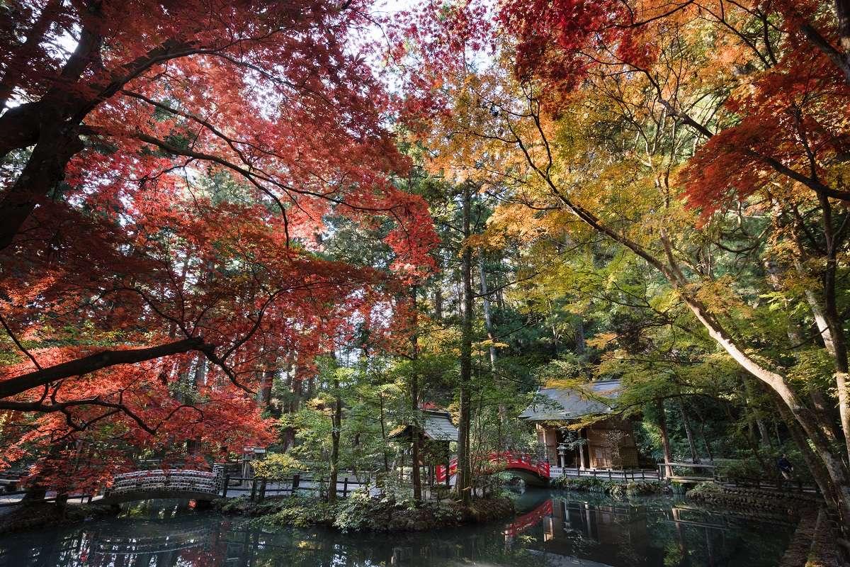 森町、小國神社、紅葉