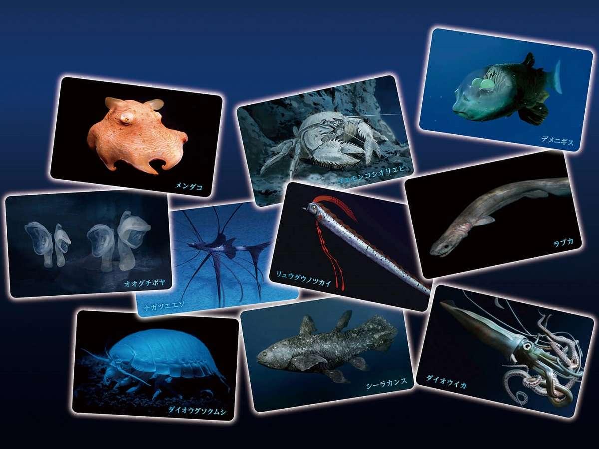 沼津市、港八十三番地、深海生物カード