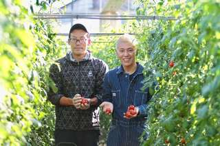 大正時代から続く「三保のトマト」