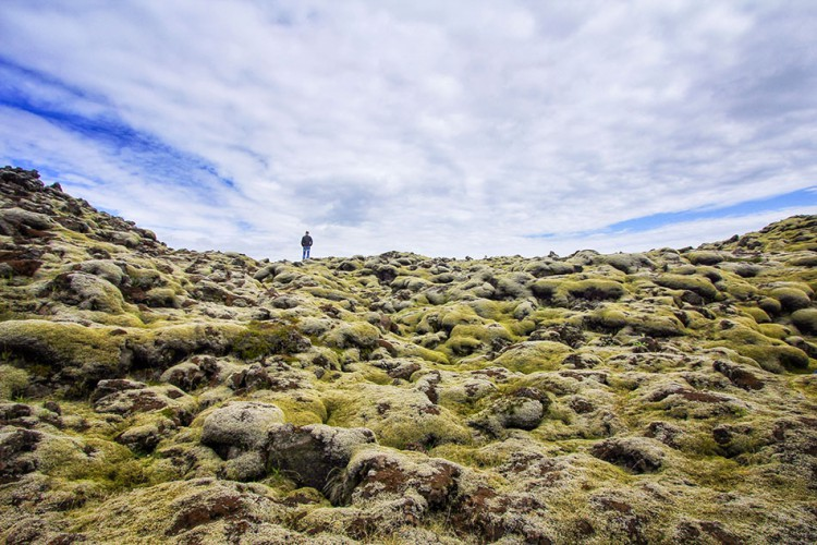 Wanderlusters-Iceland-Postcards-Moss-Field-large-750x500