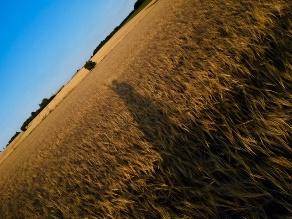 海外農業研修報告書(国際農業者交流協会・デンマーク)2月