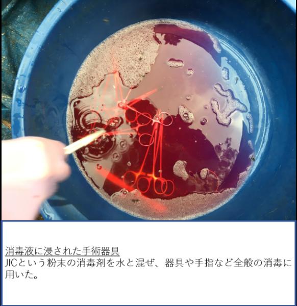 トビタテ!留学JAPAN日本代表プログラム(ウガンダ)活動報告 12月