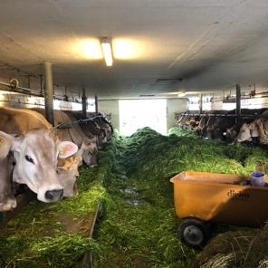 海外農業研修報告書(国際農業者交流協会・スイス)