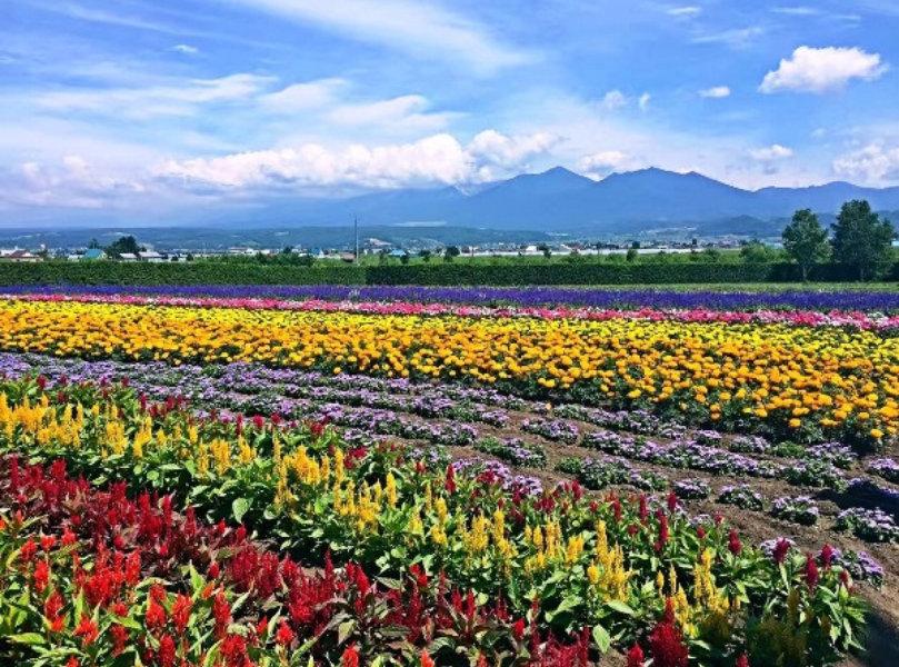Hokkaido Farm