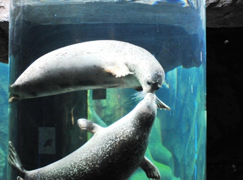Hokkaido Zoo