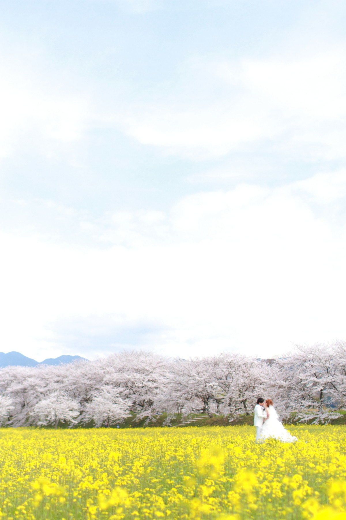 You can also find deer and cherry blossoms at Mt. Wakakusa! — Photo by Kaoru Photography