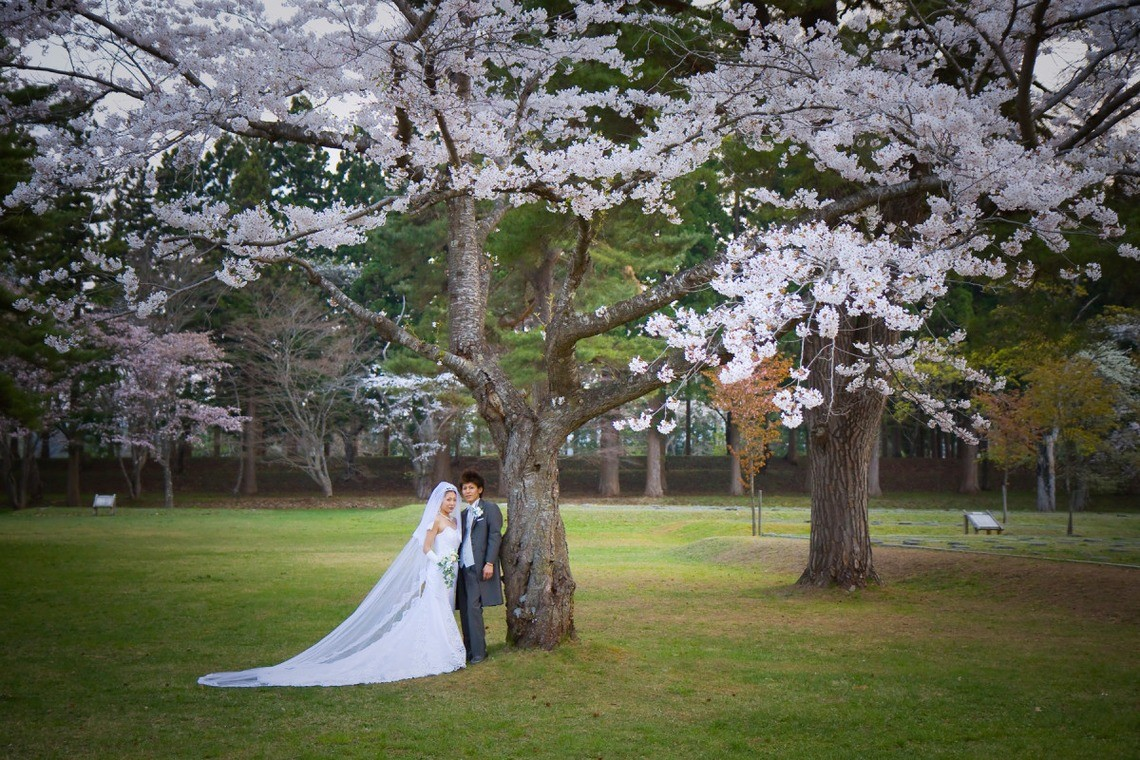 Under a cherry blossom tree — Photo by B'point photo
