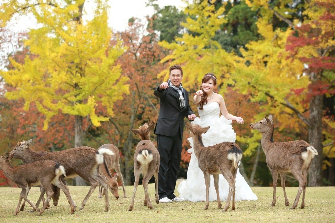 The deer will bow for a yummy treat! — Photo by Hayashi Photo Works