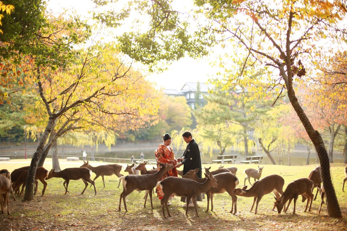 There are many deer in Nara Park — Photo by Hayashi Photo Works
